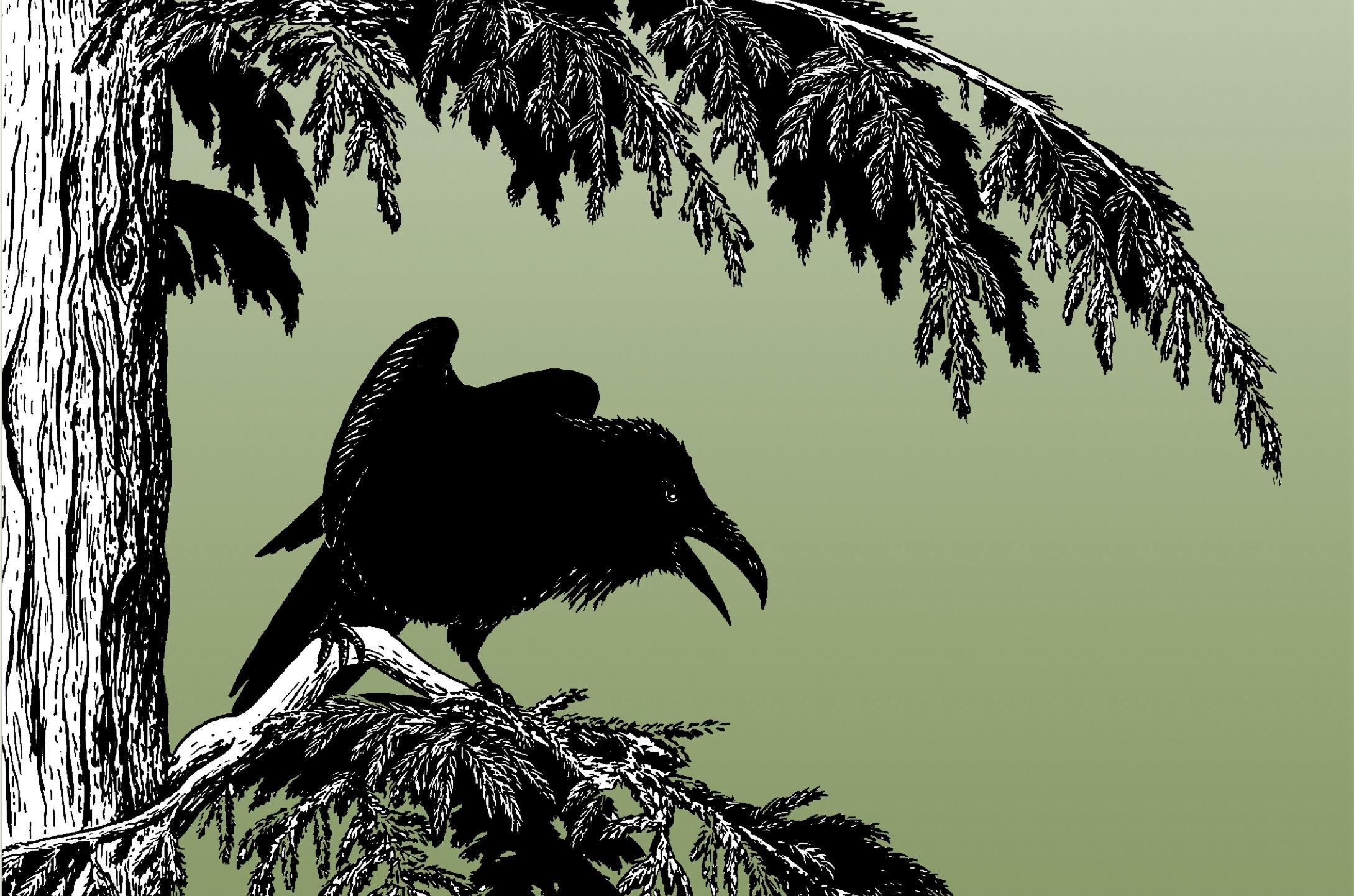 Raven's Backyard